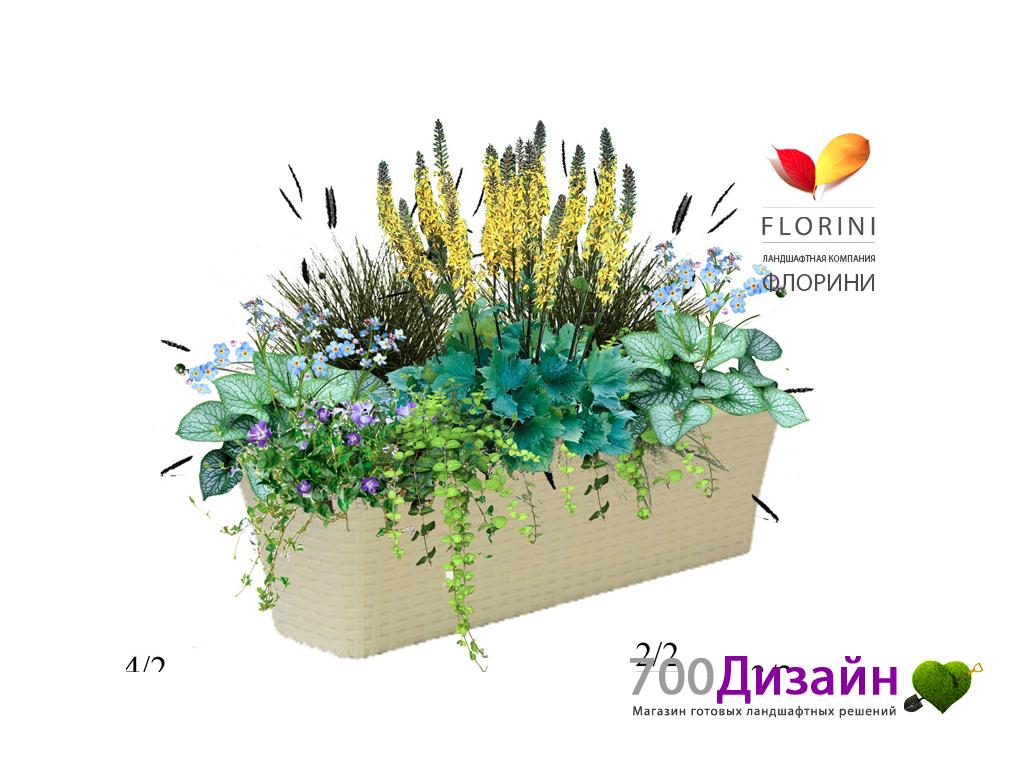 готовая схема миксбордера непрерывного цветения